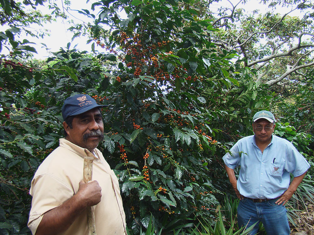 Single Origin Roasters Cafe Pacas workers